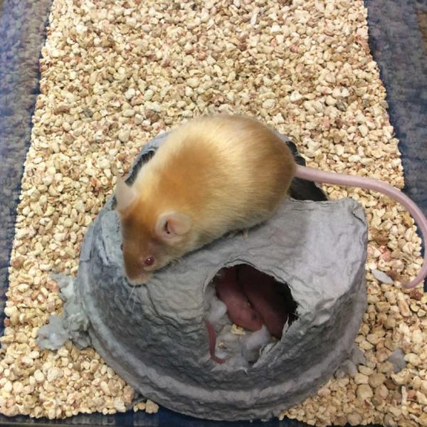 Mouse Hut - Lab Animal Supplies